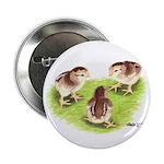 Silver Grey Dorking Chicks Button