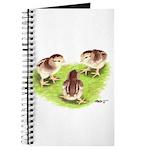 Silver Grey Dorking Chicks Journal