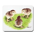 Silver Grey Dorking Chicks Mousepad