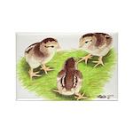 Silver Grey Dorking Chicks Rectangle Magnet (100 p