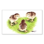 Silver Grey Dorking Chicks Rectangle Sticker