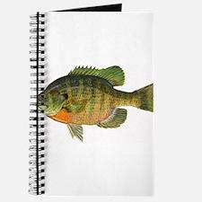 Bluegill Bob Journal