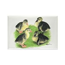 Pilgrim Goose Goslings Rectangle Magnet (10 pack)