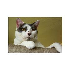 Grey & White Cat Rectangle Magnet