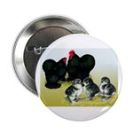 Black Cochin Family Button
