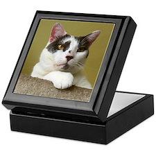 Grey & White Cat Keepsake Box