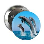 Doxie & Dolphins 2.25