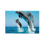 Doxie & Dolphins Rectangle Magnet