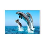 Doxie & Dolphins Mini Poster Print