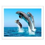 Doxie & Dolphins Small Poster