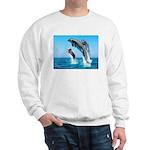 Doxie & Dolphins Sweatshirt