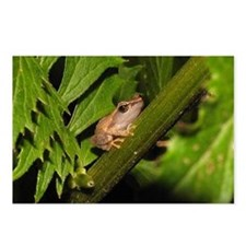 Coqui Postcards (Package of 8)