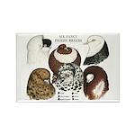 Six Pigeons Rectangle Magnet (100 pack)