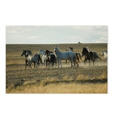 Lipizzan Mares Postcards (Package of 8)