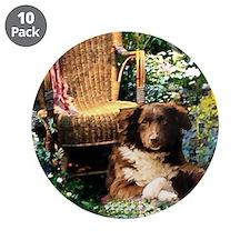 """Australian Shepherd Art 3.5"""" Button (10 pack)"""