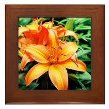 Lily - Framed Tile