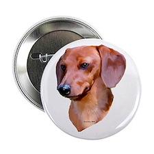 red dachshund Button