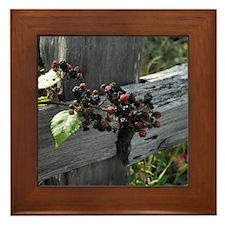 Fence Berries Framed Tile