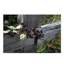 Fence Berries Postcards (Package of 8)
