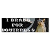 Squirrel Bumper Stickers
