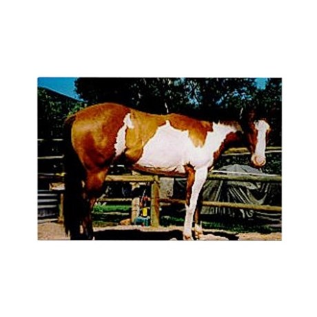 Buckskin Overo Paint Horse Rectangle Magnet