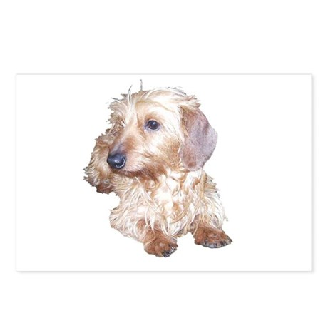 Fawn Wire Haired Postcards (Package of 8)