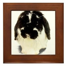 Broken Black Holland Lop Framed Tile