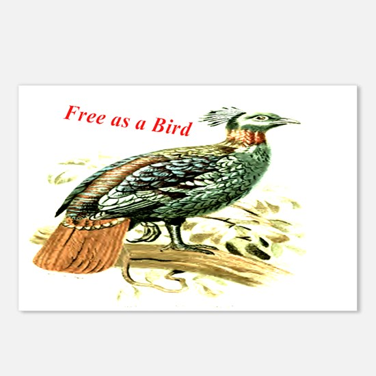 Drawing of a pheasant Postcards (Package of 8)