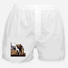 Border Terrier and Rat Boxer Shorts