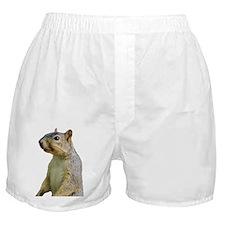 Cute Squirrel Boxer Shorts