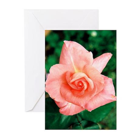 Rose Bud - Greeting Cards (Pk of 10)