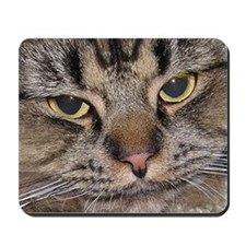 Stubby Cat Mousepad