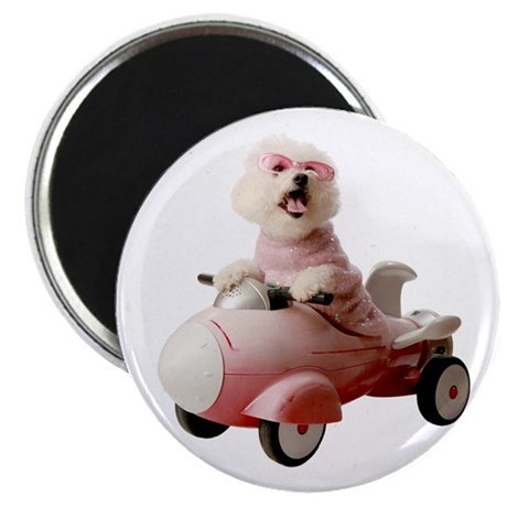 "Fifi the Bichon Frise 2.25"" Magnet (100 pack)"