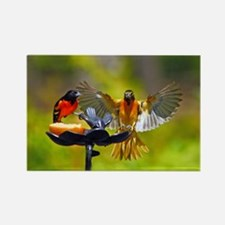 Oriole Pair Rectangle Magnet