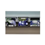 Hurricane Rectangle Magnet (10 pack)