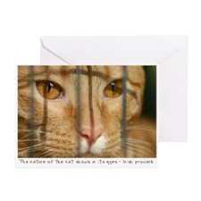 Nature of the Cat Greeting Cards (Pk of 10)