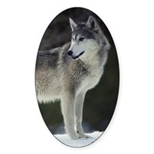 """""""Timber Wolf"""" Oval Decal"""