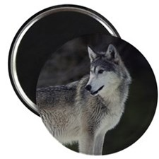 """""""Timber Wolf"""" Magnet"""