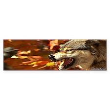 """""""Snarling Lone Wolf"""" Bumper Bumper Sticker"""