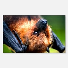 RODRIGUEZ FRUIT BAT Rectangle Decal