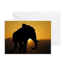 Bull Elephant Greeting Cards (Pk of 10)