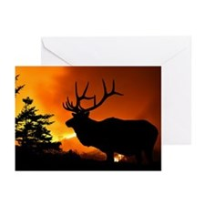 Elk Greeting Cards (Pk of 10)
