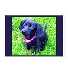 Black Puppy Postcards (Package of 8)