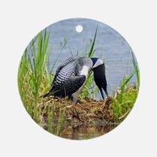 Common Loon on nest Ornament (Round)