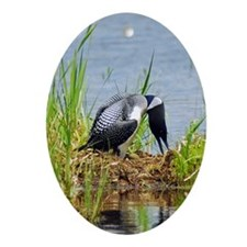 Common Loon on nest Oval Ornament