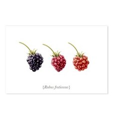 Blackberry Postcards (Package of 8)