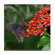 Black and Red Butterfly Tile Coaster