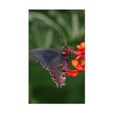 Black and Red Butterfly Rectangle Decal
