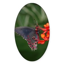 Black and Red Butterfly Oval Decal
