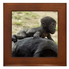 Baby Gorilla Framed Tile